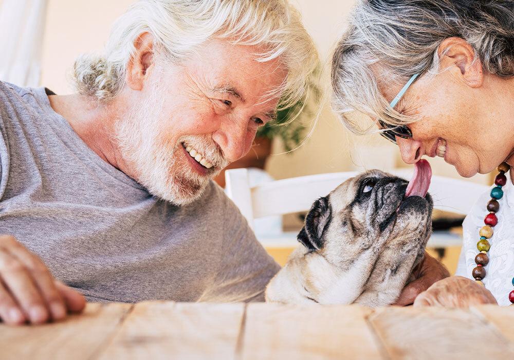 Una mascota: un acompañante para el bienestar